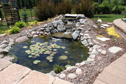 Pond Rejuvenation